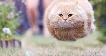 fat-cat-running-580x405.jpg