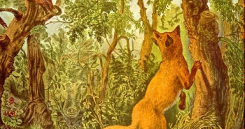 saklı hayvanlar illüzyonu